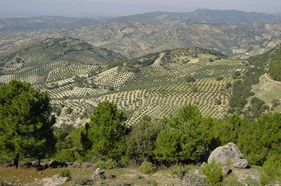 Oleoturismo en Jaén - Olivar